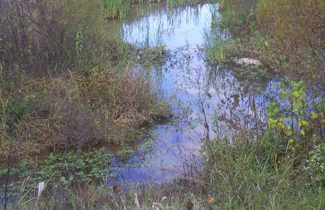 Stream Restoration_Civil-WaterResources