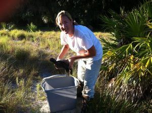 gopher tortoise relocation